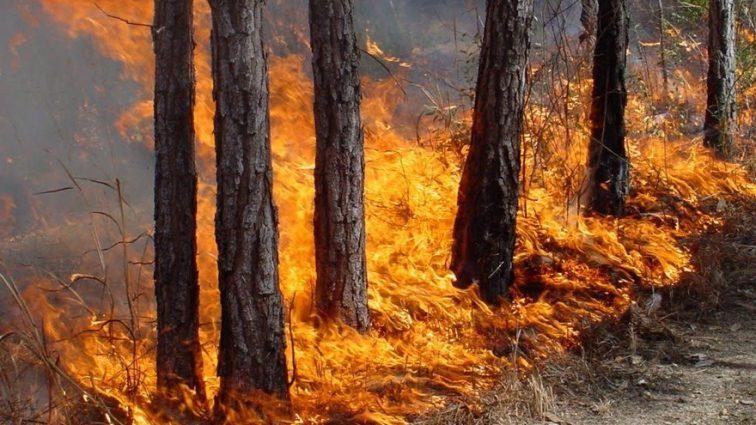 Лесные пожары охватили Дальний Восток, узнайте детали