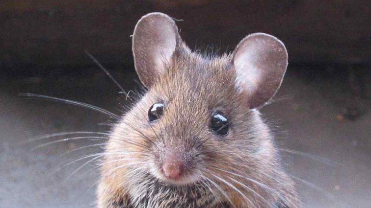 «Мыши съели!»: грызуны уничтожили банкноты на общую сумму более миллиона