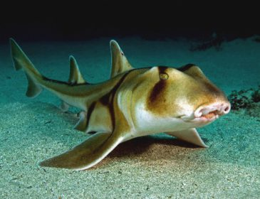 Невероятная кража: как похитили акулу из открытого бассейна