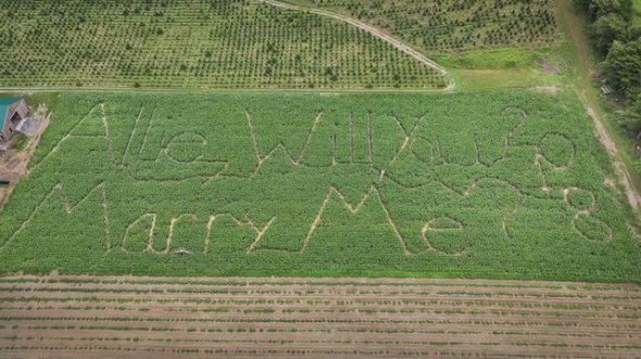Мужчина выкосил кукурузу на поле ради предложения своей любимой