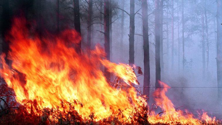 В Латвии горит национальный лесной парк