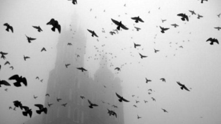 Жуткое природное явление: Якутия погрузилась во тьму, погибли птицы