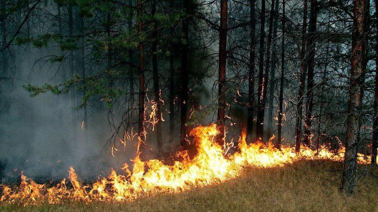 В Латвии уже больше недели горят леса, стране пришлось просить помощи у Евросоюза