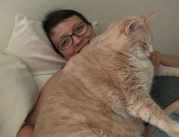 Пара взяла аномально толстого кота из приюта и посадила его на диету