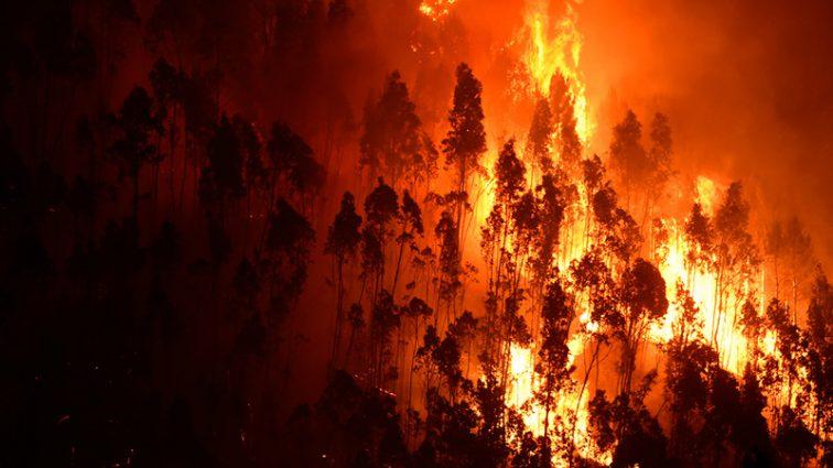 «Европа в огне»: Аномальная жара уничтожает жилые кварталы