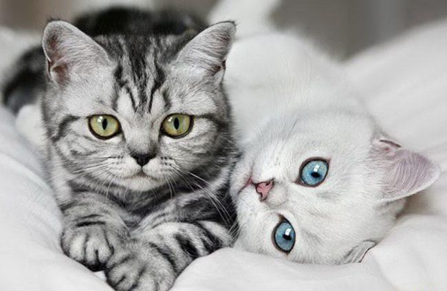 Российским гражданам запретили держать дома больше двух кошек