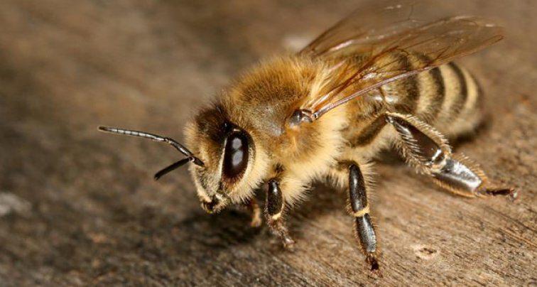 Заблудившийся турист был вынужден шесть дней есть пчел, чтобы не умереть с голоду