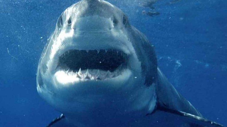 В Египте акула жестоко убила туриста из Чехии