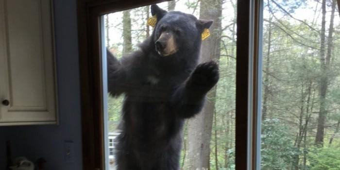 У женщины в доме похозяйничал медведь и за «гостеприимство» лишил ее глаза