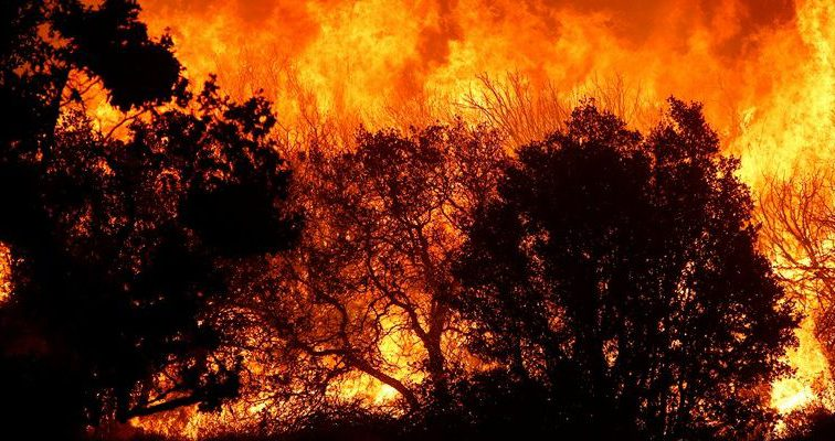 Уже вторые сутки не могут потушить пожар на белорусском Полесье, МЧС не справляется