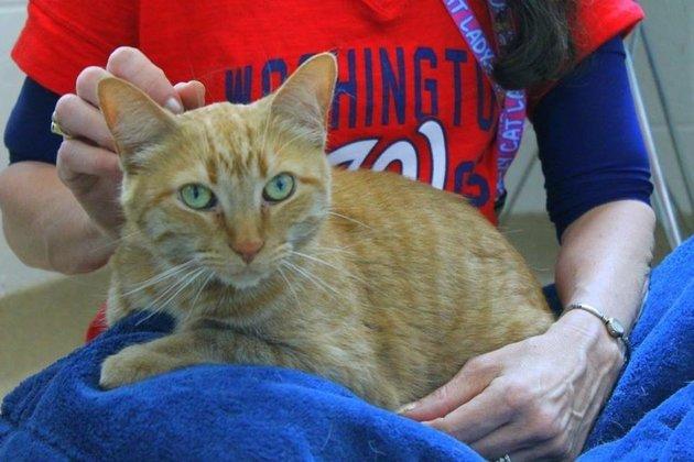 Мужчина погладил умирающую кошку и заразился от нее опасной болезнью