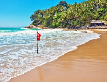 В Австралии закрыли пляжи из-за нашествия морских обитателей. Это удивительно!